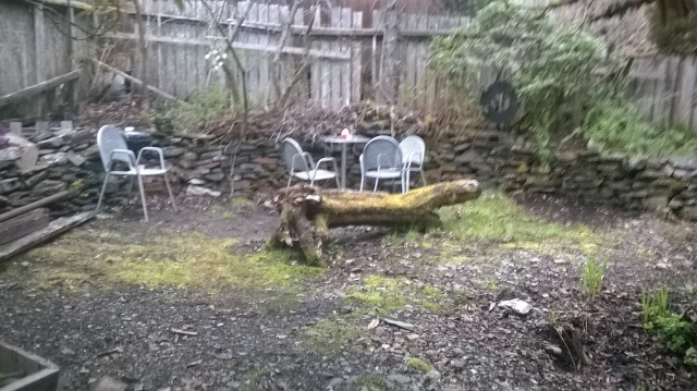 The back yard on a drizzly day.